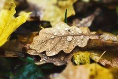 Fall autumn season background, fallen leaves under rain stock image