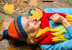 Fall and autumn season concept. Hipster woman knitted hat and scarf hold autumn leaves. Fall cozy atmosphere. Girl. Cheerful face lay on wooden background with royalty free stock photo