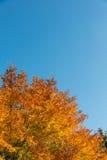 Fall autumn season Stock Photography