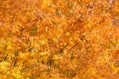 Fall autumn season Stock Images