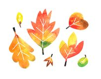 Fall watercolor leaves collection on white background vector illustration
