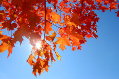 Fall/autumn sky Royalty Free Stock Photos
