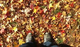 Fall into autumn. Standing in  leaves in autumn Stock Photography