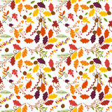 Fall, Autumn or Thanksgiving Vector Flower Pattern. Seamless and Tileable Royalty Free Stock Photography
