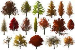 Fall autumn Tree foilage collection set isolated. 3D Illustration Stock Images