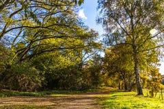 Fall Autumn way to walk Stock Image