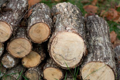 Fall Autumn Wood Pile royalty free stock photography