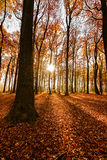 Fall / Autumn in the woods portrait format Royalty Free Stock Photography
