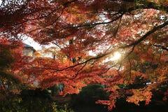 Fall. Autumn at Yasehieizanguchi Royalty Free Stock Photography