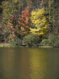Fall-Bäume Stockfoto