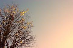 Fall-Bäume Stockbilder