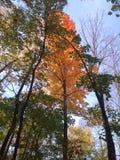 Fall-Bäume Lizenzfreie Stockfotografie