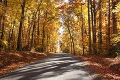 Fall-Bäume Lizenzfreie Stockbilder