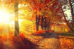 Fall Bäume, die noch mit etwas goldenen Farben grün bleiben Lizenzfreie Stockbilder