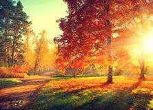 Fall Bäume, die noch mit etwas goldenen Farben grün bleiben Stockfotografie