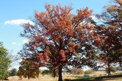 Fall-Bäume mit Kanonen stockfoto