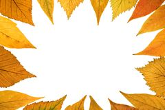 Fall background Royalty Free Stock Images