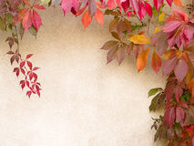 Fall background. Colored fall leaves creating a natural border before a light wall Stock Photo