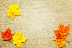 Fall background. Fall-themed background of burlap and colorful leaves Stock Photo