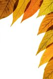 Fall background 3 Royalty Free Stock Photos