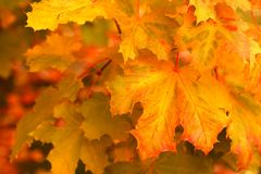Fall background royalty free stock photography