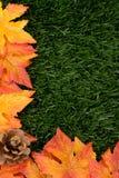 Fall Background stock photos