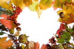 Fall background. On a multicolored leaves Royalty Free Stock Photo