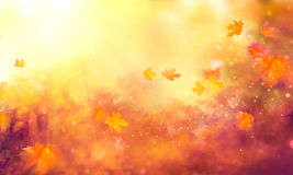 Fall background. Autumn colorful leaves. And sun flares Royalty Free Stock Images