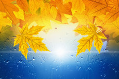 Fall background Stock Images