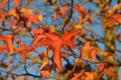 Fall Background with Autumn Leaves Stock Photos