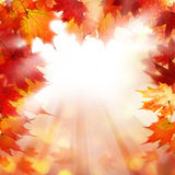 Fall Background with Autumn Maple Leaves Stock Photo