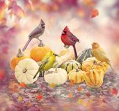 Fall background with birds and pumpkins. Fall colorful background with birds and pumpkins royalty free stock images