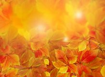 Fall background. Colorful red and orange autumn leaves on forest floor with sun rays coming through the foliage. Stock image royalty free stock photography