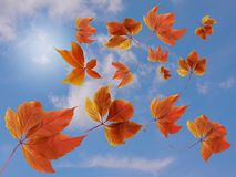 Fall background. Colorful red and orange autumn leaves with sun rays - abstract royalty free stock photography