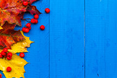 Fall background colour leaves rowan fruit on blue boards Stock Photography