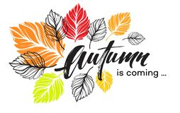 Fall background design with colorful autumn leaves. Vector illustration. EPS10 Royalty Free Stock Image