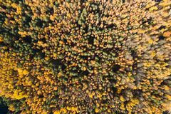 Fall background. Fall forest from above. Autumn forest with colorful leaves. Aerial drone view stock image
