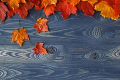 Fall background frame with maple leaves on blue Royalty Free Stock Photos