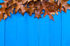 Fall background leaves blue boards Stock Image