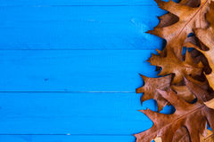 Fall background leaves blue boards Stock Photos