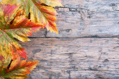 Fall Background. With Maple Leaves on Wood Stock Image