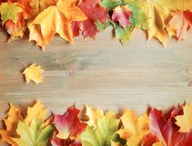 Fall background. Maple varicolored fall leaves on the wooden background. With free space for text. Fall border background, fall composition with colorful maple stock photo