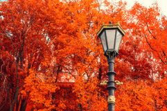Fall background. Metal lantern on the background of the fall trees. Fall trees background. Metal lantern on the background of the fall trees. Fall park scene in royalty free stock photos