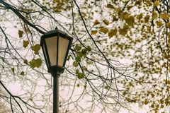 Fall background. Metal lantern among yellowed leaves. Park scene in vintage tones. Concept autumn nostalgic mood. Melancholy. With place for your text, for Royalty Free Stock Photo