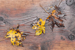 Fall background Royalty Free Stock Image