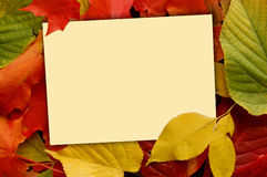 Fall background with note card. Fall colorful leaves with copy space Royalty Free Stock Photo