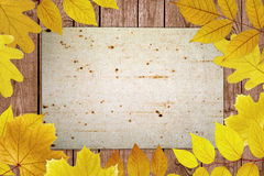 Fall background Stock Photography