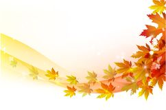 Autumn leaves maple and with papper background. Fall background for orange season with collection of orange and yellow maple leaves falling and with empty or Royalty Free Stock Photography