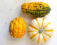 Fall background with pumpkins Royalty Free Stock Image
