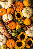 Fall background with pumpkins stock images
